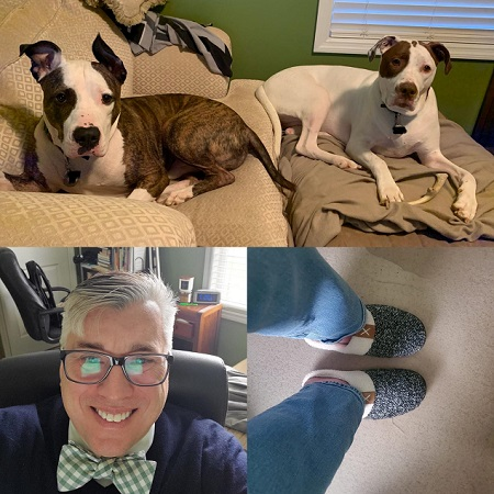 Rescue Dogs Rooney and Tequila Rose look on at a Bowtie clad Tim Kubiak in slippers as he works the phones from the home office